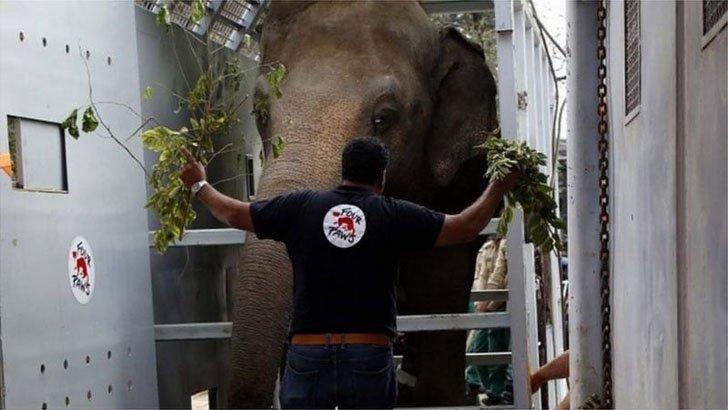 কম্বোডিয়ায় নতুন জীবন 'পৃথিবীর নিঃসঙ্গতম' হাতির